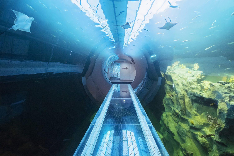großaquarium tunnel acrylglas